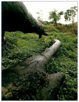 Fallen Hero by exoart