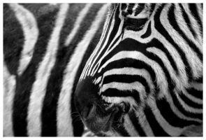 I love my stripes... by Wereldreizigster