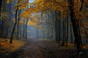 -Saphire road- by Janek-Sedlar