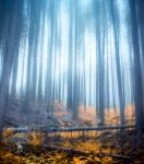 Misty forest by jacekson