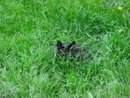 Cat in the Grass by betterwatchit
