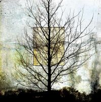NakedTree02 by horstdesign