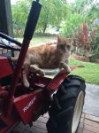 Sitting on the tractor again by Scarletcat1