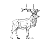 Red Stag by StaticRed