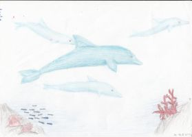 Dolphins by Leopardenschweif