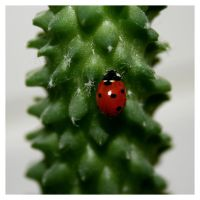 Lady bug by Ermenelwen