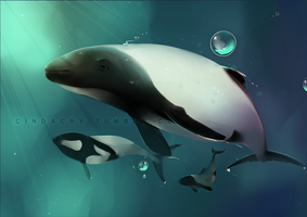 Commerson Dolphin by Cindacry