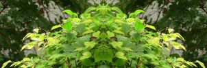 Organic Symmetry 13 by meathive