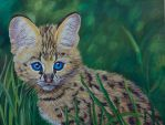 Serval kitten by Sarahharas07