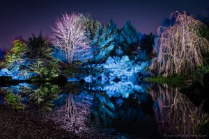 Botanical Garden at Night by chemicalflaw