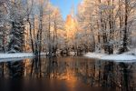 Reflection trees with sunlight by RomGams
