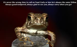 BABY TOAD by ForsakenRaptor