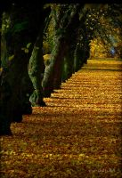 Autumn ..11.. by my-shots