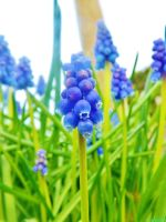colourful spring flowers by IamNasher
