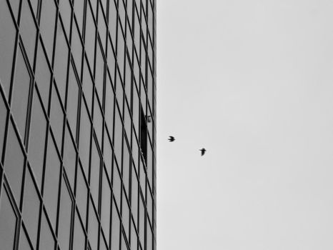 Birds flying out by glue-poland