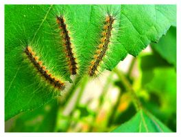 caterpillars by an6el-of-death