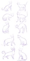 cat sketches-anatomy practice by BakaMichi