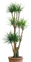 plant png 3 by DIGITALWIDERESOURCE