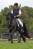 Friesian ridden 2 by Sooty-Bunnie