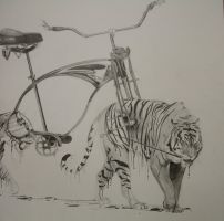 RISD Bike Drawing by dcbryant