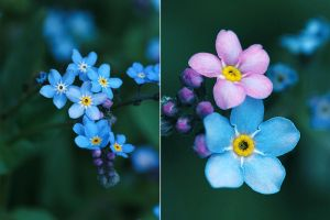 forget-me-nots. by girlmarvel