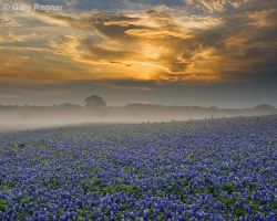 Misty Morning Sunrise by gregner