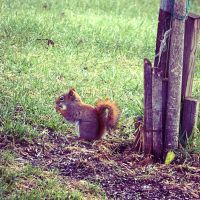 Squirrel by iAmoret