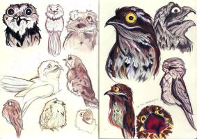 Potoo! Research Studies by neofeliss
