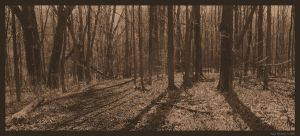 Vintage Forest by mr-sarcastic1984