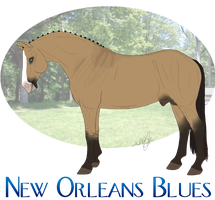 New Orleans Blues Ref. - Sold by Cerulean-Sky-Stables