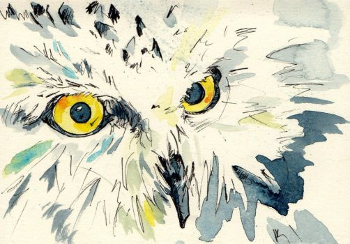 Owl Stare by jashme
