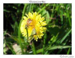 Dandelion Bee by JustLovely