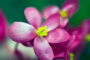 Yellow stamen and pistils... by drewii57
