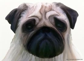 Pug. by VeIra-girl