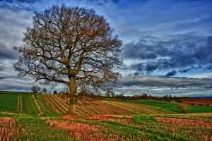Worcestershire Dreaming by Capturing-the-Light