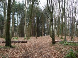 Autumn Forest Landscape Stock by Lucy-Stock