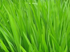 grass green wallpaper by real-live-lover