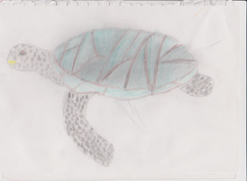 Turtle by Silver-Rainbow-Kitty