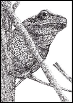 Pen and Ink : Smiling Frog by Bluedknn