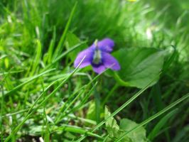 Purple Flower...and Grass by Serena4