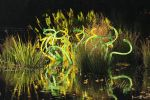 Chihuly by 1001G