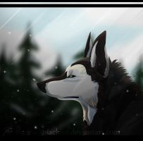 Snow fall by XBlackIce