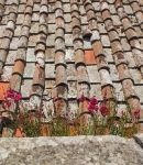 Flowers on the roof by seianti