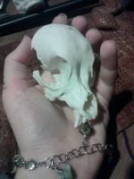 Toy Poodle Skull by Pheasant-Sky