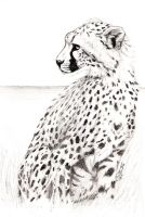 Cheetah2 by JenDragon