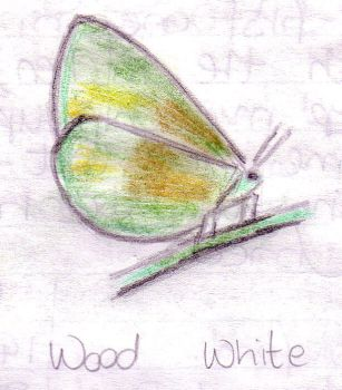 Wood White by NixxyB