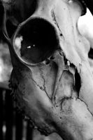 Skull in Black and White by StolenSecrets