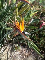 Birds of Paradise! by Sugerpie56