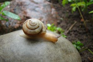 Little snail 6 by Panopticon-Stock