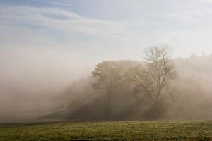 Trees in the fog5 by archaeopteryx-stocks
